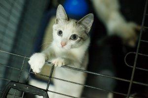 Кошки и собаки, которым нужен дом