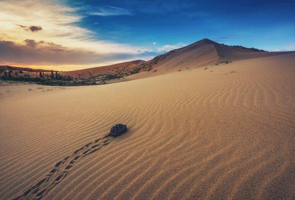 В конце ноября появится природная википедия - Фото №6