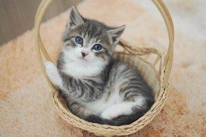 Забирай меня скорей: кошки и собаки, которые ищут хозяев