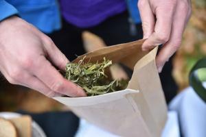 В Грузии декриминализировали марихуану