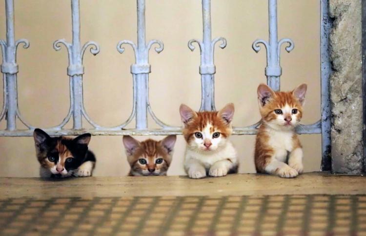 Котики и люди: зачем смотреть фильм про Стамбул «Город кошек»