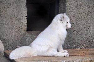 В Московском зоопарке построят павильоны с искусственным климатом