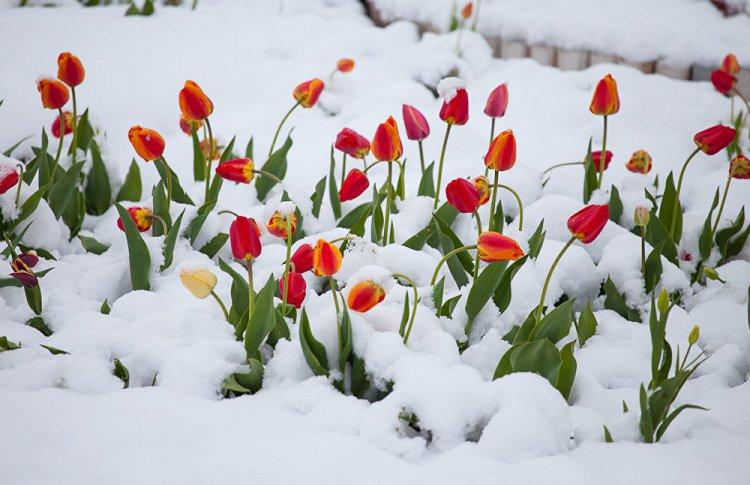 Синоптики обещают Москве сильный снегопад на Праздник весны