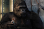 5 лучших фильмов с обезьянами