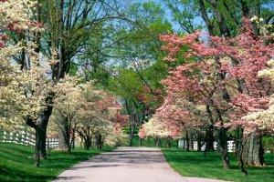 50 оттенков весны в городских и загородных парках