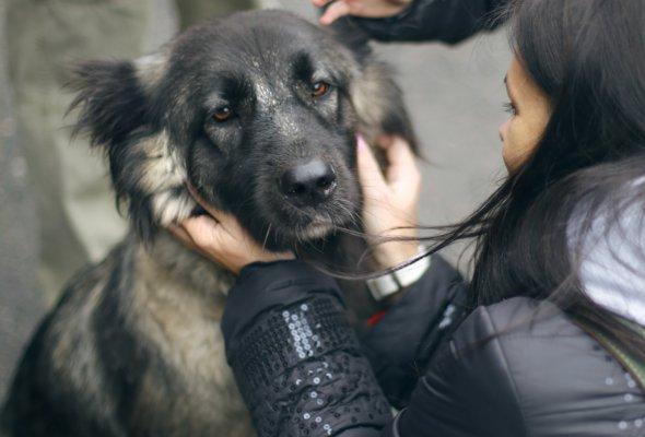 бездомные животные - Фото №3