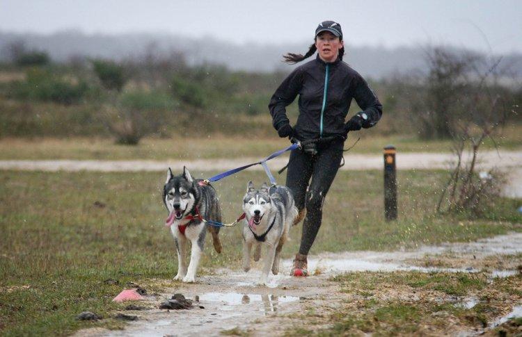 В Москве проведут лекторий по бегу с собаками
