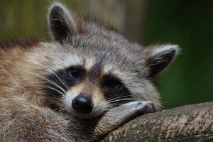 В Московском зоопарке укладывают животных спать и переходят на зимнее время