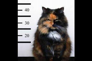 Милонов предложил запретить обвинять котов в преступлениях