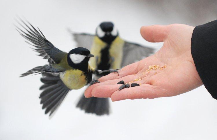 Москвичей призвали не убивать птиц хлебом