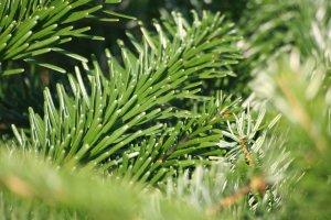 В трех районах города заработают пункты по приему елок