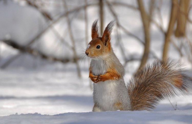 ВДНХ приглашает москвичей кормить белок