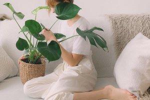 5 растений, которые добавят стиля и уюта квартире