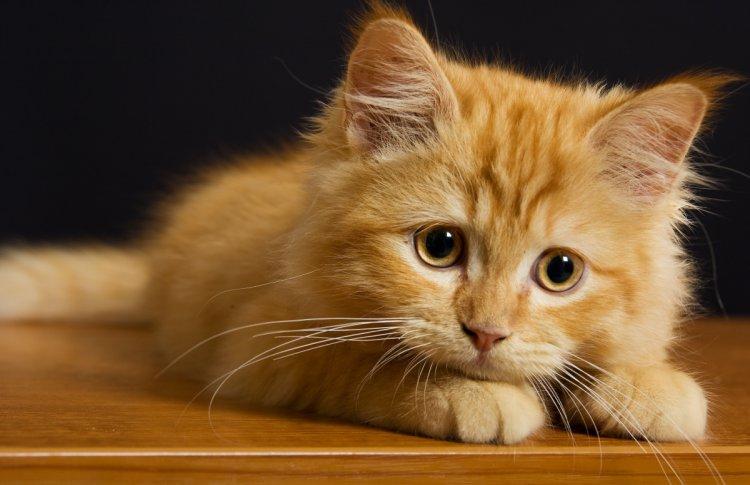 Эксперты обратили внимание на зимнюю депрессию домашних животных