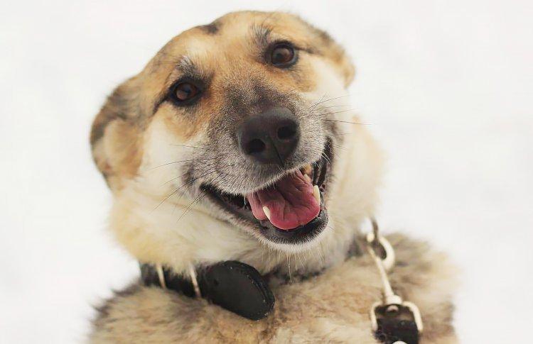 Молодожены и ВДНХ приглашают москвичей покровительствовать собакам