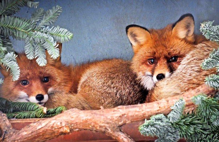 В Московском зоопарке покажут «Страсти в перьях»