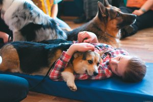 В Домодедово заведут собак для объятий