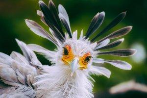 Москвичи с птичьими фамилиями получат скидку на билет в зоопарк