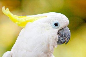 Попугаю-неврастенику в орнитарии Москвы полегчало