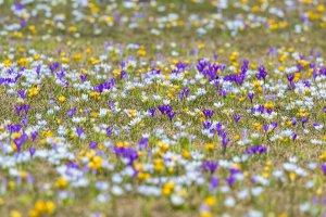 ВДНХ разработала карту цветения для посетителей