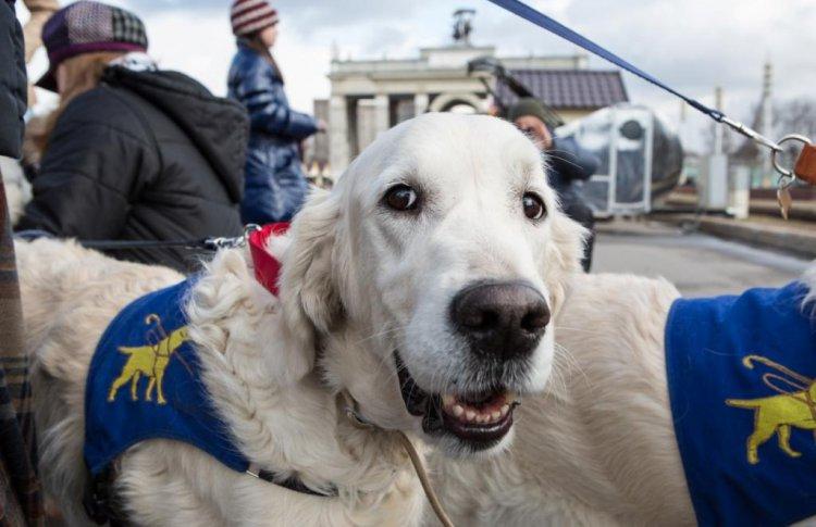 На ВДНХ пройдет «День с собакой-проводником»