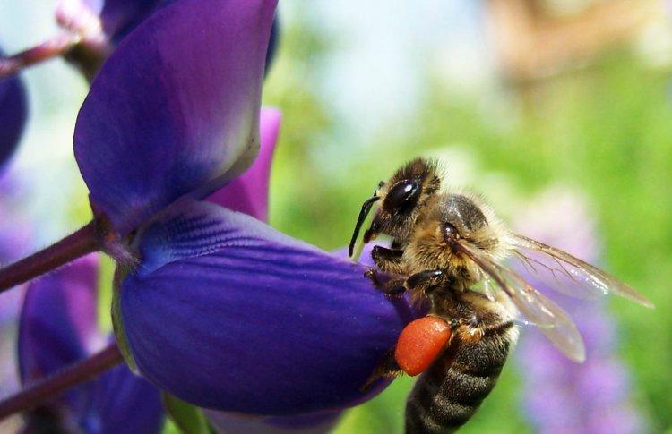 В Московском зоопарке построили гостиницу для одиноких пчел