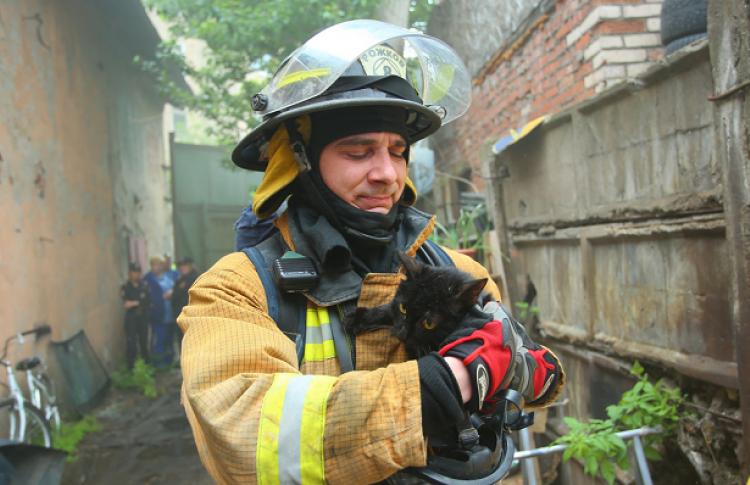 Требуется срочная помощь лекарствами и кормами приюту «Брошенный ангел», где сегодня случился пожар