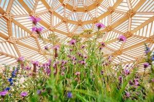 Летние сады «Цветочного джема» откроются 20 июня