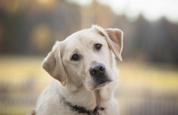 В парках Москвы хотят раздать 30 собак