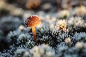 Шутка «спасибо, что не мороз» стала явью: МЧС предупреждает о похолодании до +1°C в Ленобласти