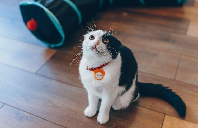11 способов помогать бездомным животным: инструкция для жителей мегаполиса