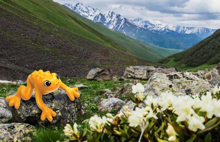 Строим экотропу вместе! Kinder® и WWF России приглашают юных натуралистов принять участие в новой инициативе бренда