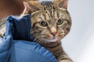 На OZON появились лежанки для питомцев #БРОНЕБАГАЖ, вдохновленные историей кота Виктора