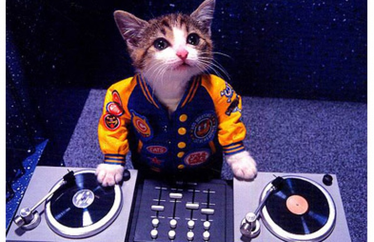 DJs Brutal, Rubin (ska, rock, ragga)