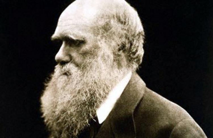 Эволюция - миф или реальность?