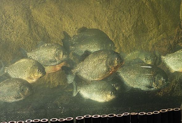 Тайны подводного мира - Фото №2