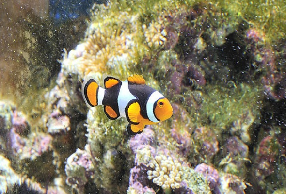 Тайны подводного мира - Фото №4