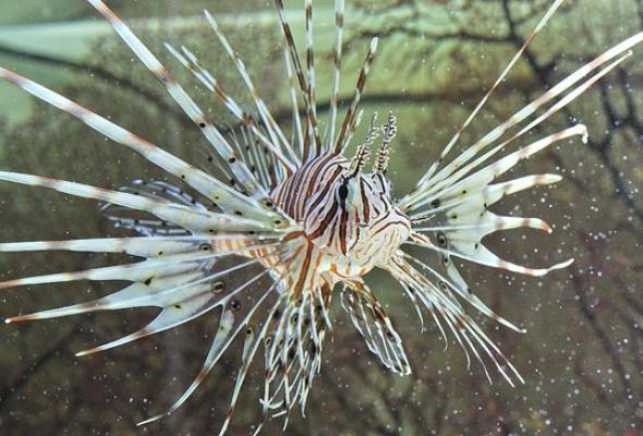 Тайны подводного мира - Фото №5