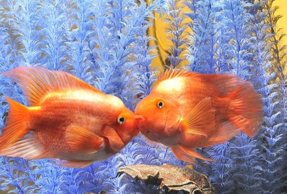 Тайны подводного мира - Фото №10