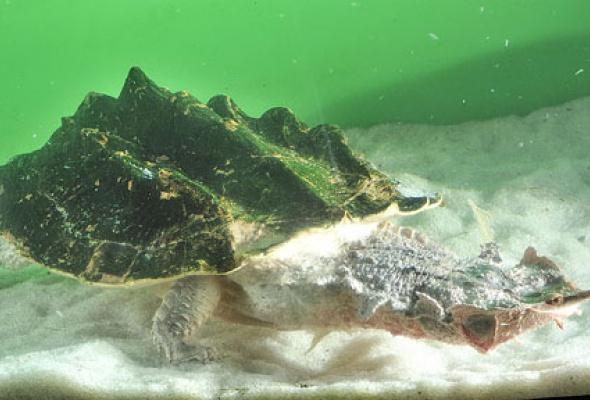 Тайны подводного мира - Фото №14