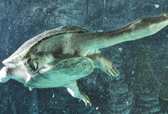 Тайны подводного мира - Фото №15