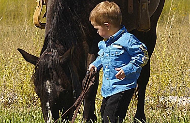 Необычный конно-подарок