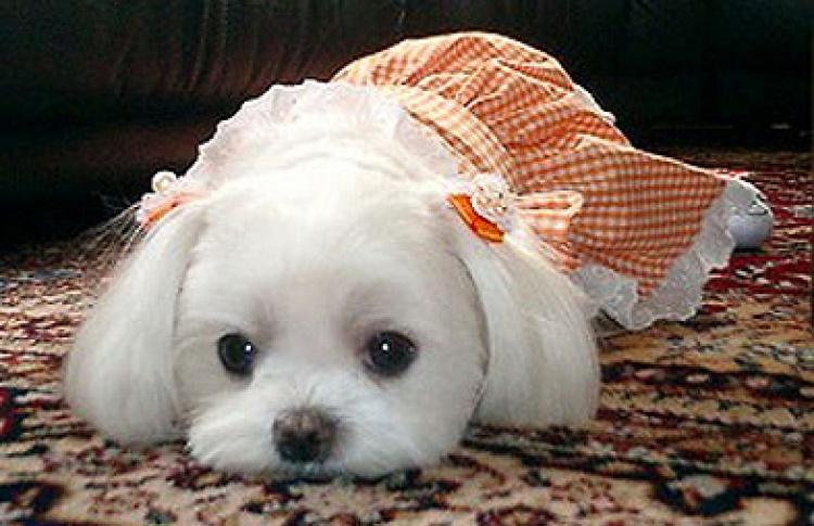 Домашние животные вМоскве: инструкция повыживанию