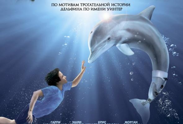 История дельфина - Фото №0
