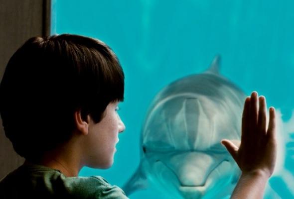 История дельфина - Фото №1