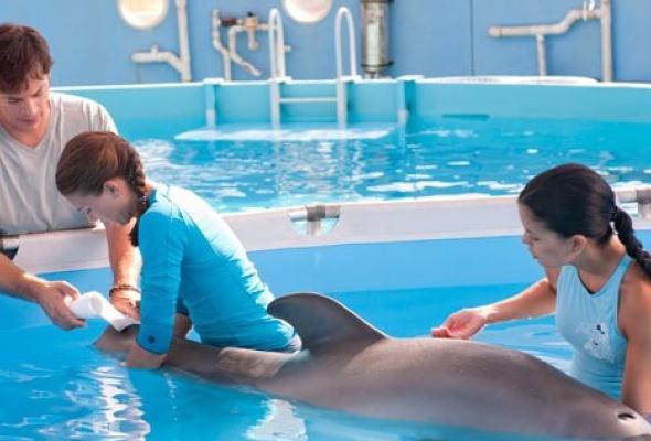 История дельфина - Фото №4