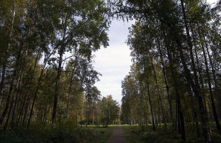 "Парк ""Сосновая поляна"""