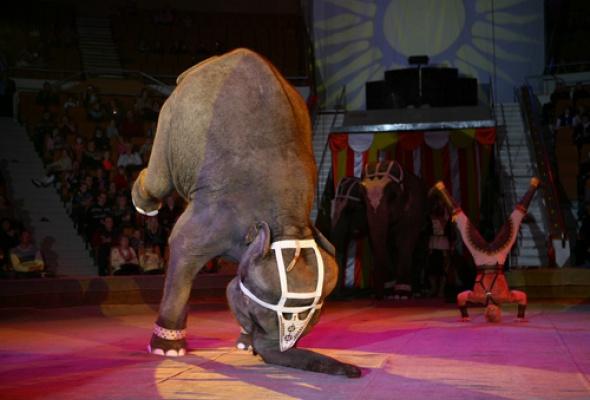 Цирк на Фонтанке - Фото №8