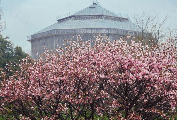 Ботанический сад Петра Великого - Фото №1