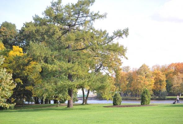 Центральный парк культуры и отдыха (ЦПКиО) - Фото №1